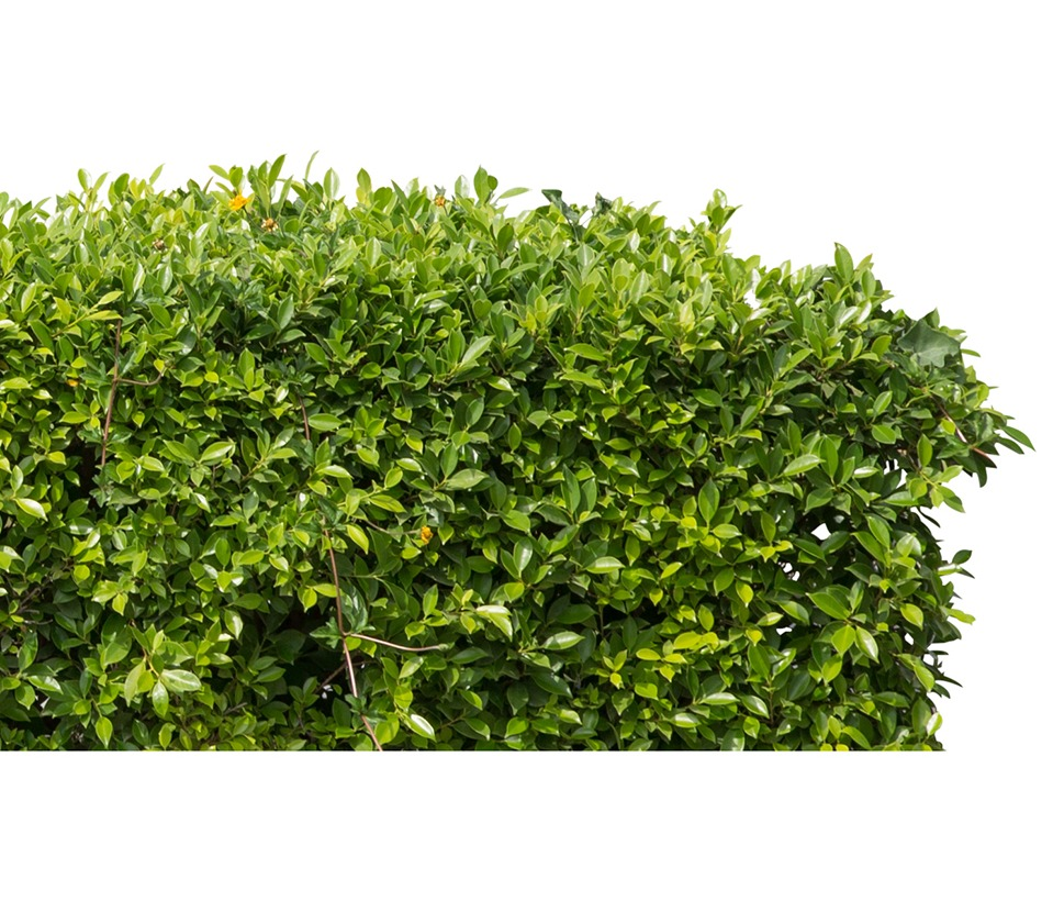 Hedges, bushes and climbing plants